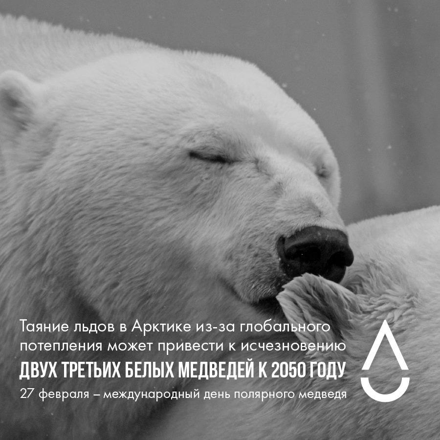 27 февраля День полярного медведя. Проблемы потепления открытки фото рисунки картинки поздравления