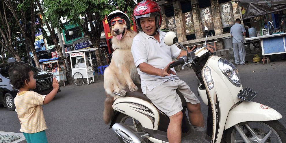 4. Очки и шлем — два обязательных атрибута безопасной езды. (Фото Jefta Images):