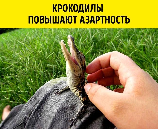 © imgur     Ученые изАвстралии призывают неконтактировать скрокодилами, если вынехот