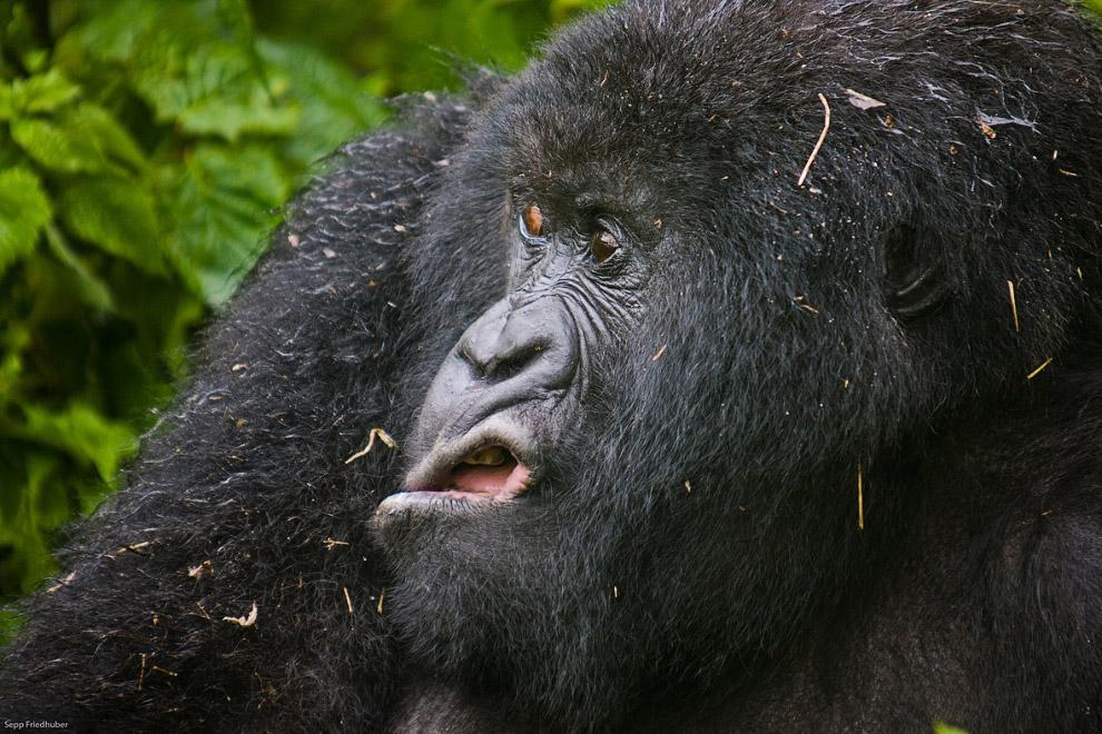 23. Ямаха-такси. (Фото Katy Laveck Foster | The Comedy Wildlife Photography Awards):