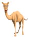 camel_PNG23422.png