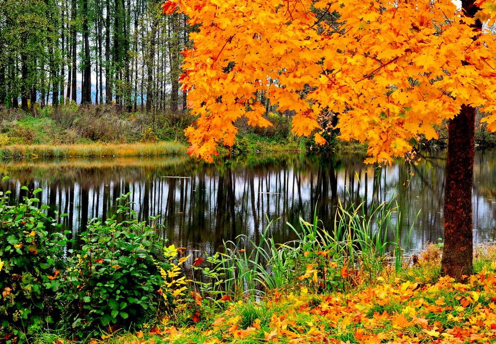Картинки об осени для скачивания