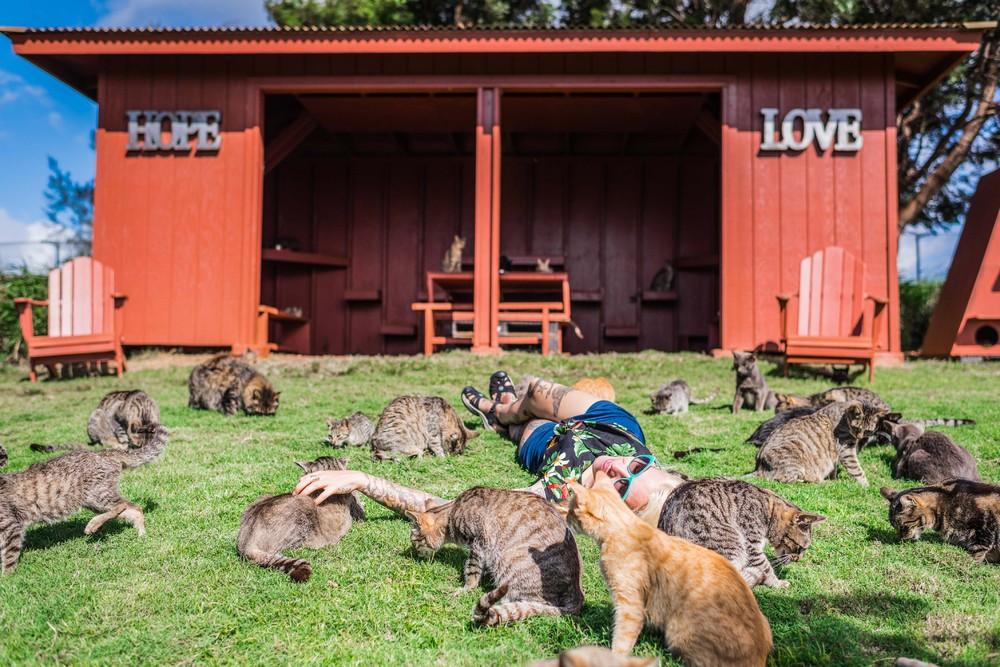 Рай для кошек на Гавайях