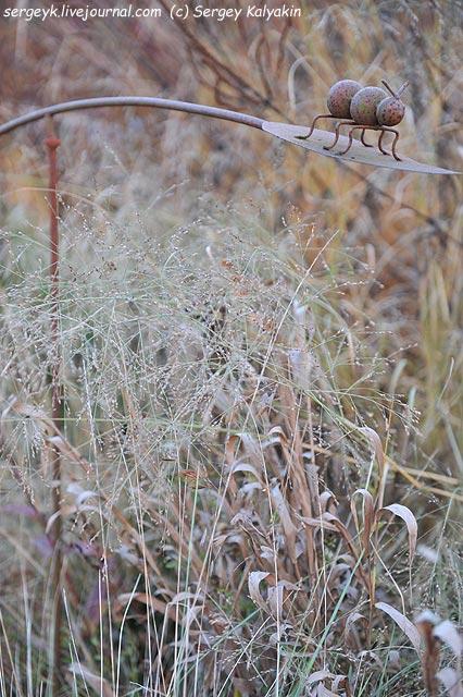 Chasmantium latifolium Panicum virgatum.JPG