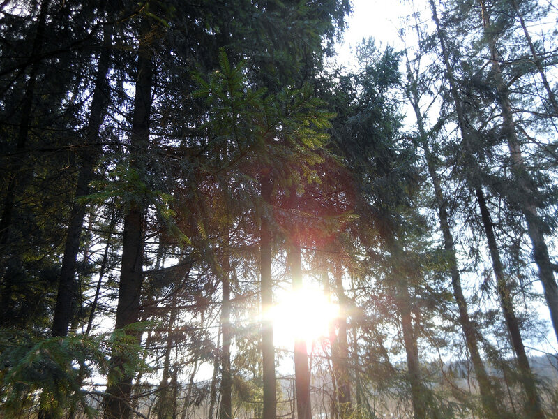 В лесу родилась елочка...