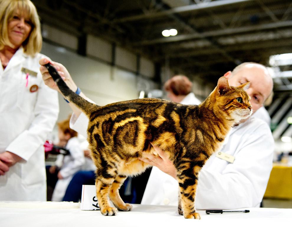 11. Ученые полагают, что кошки были одомашнены на Ближнем Востоке около IV тысячелетия до н.э. Один