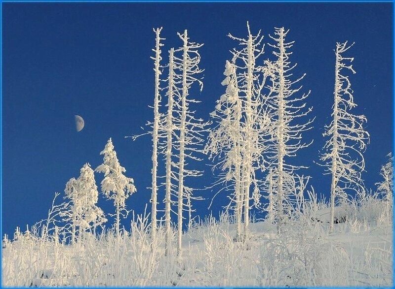 В белом сказочном лесу... .jpg
