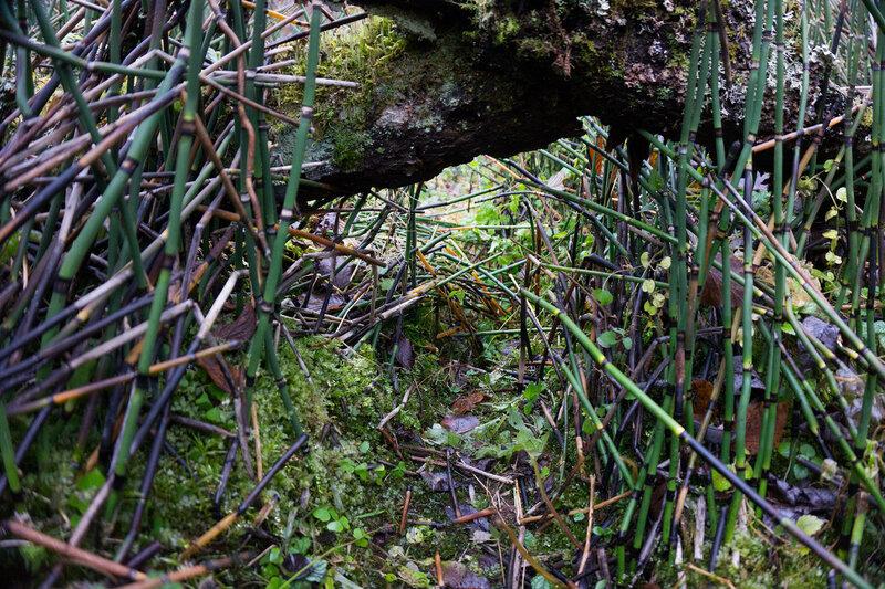 тропа бобров в хвоще на берегу реки оредеж