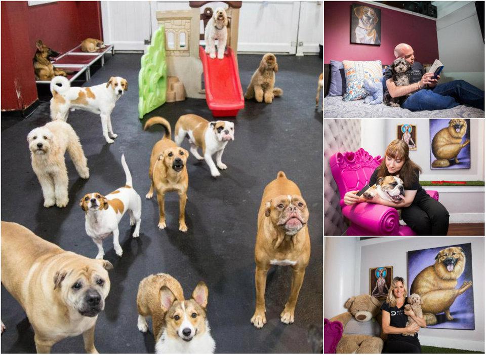 Педикюр, двуспальные кровати и 24-часовой уход: роскошный отель для собак в Нью-Йорке