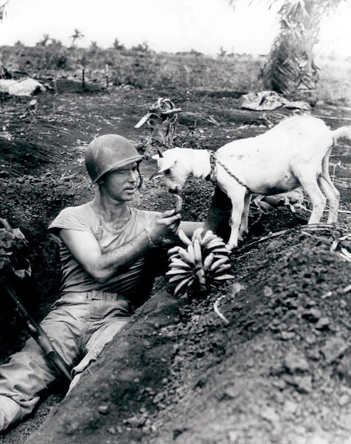 16. Солдат делится бананом с козочкой во время войны на Сайпане, ок. 1944 года.