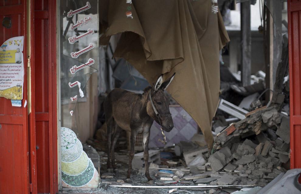 22. Утро в городе Газа, 6 августа 2014. (Фото Reuters | Finbarr O'Reilly):