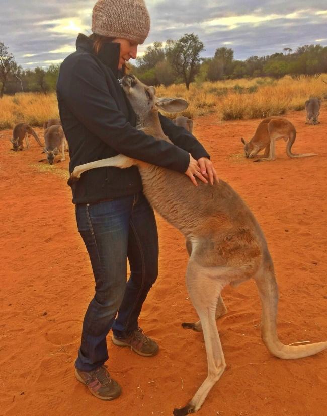 © The Kangaroo Sanctuary Alice Springs/facebook     Эбигейл спасли идоставили взаповедн
