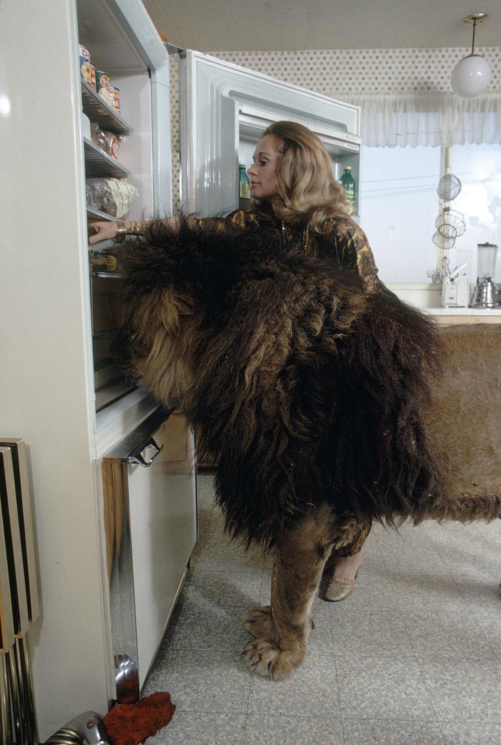 7. Люди не входят в пищевую цепочку львов, они — звучит странно — невкусные. Поэтому львы людоеды —