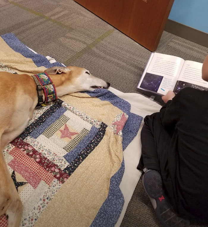 Facebook библиотека работа собаки
