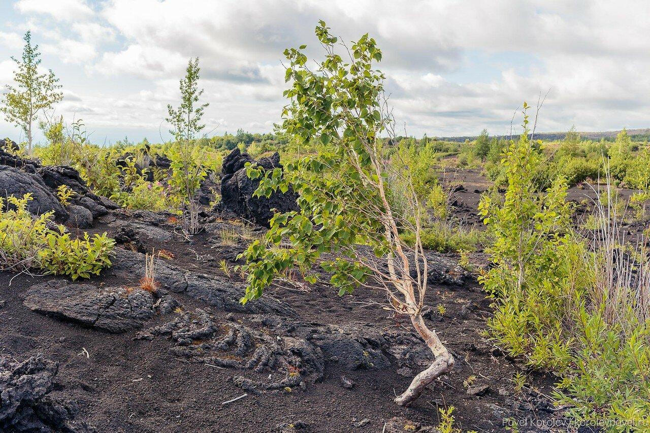 Kamchatka-145.jpg