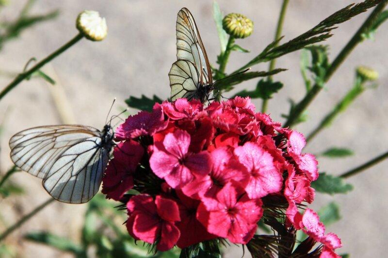 бабочки1.jpg