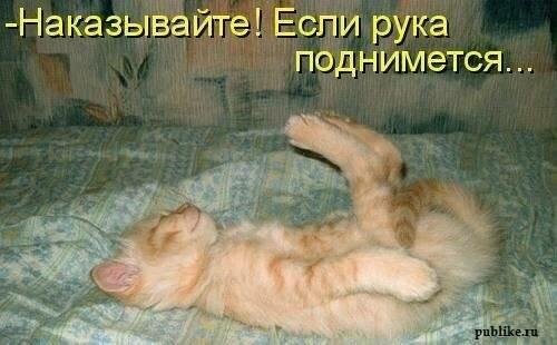 Звери в теме;) - Страница 4 0_b4e94_4578363_L