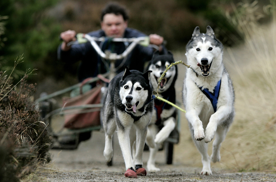 Geof Holroyd from Preston Lancashire, England, takes his team of huskies on a practice run in Glenmo
