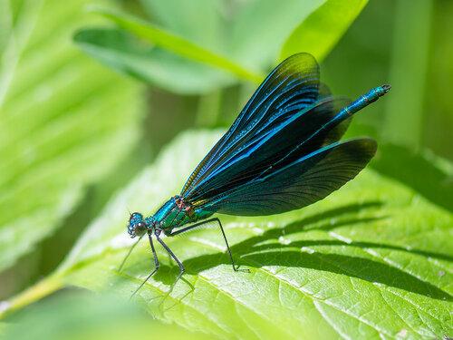 Альбом:  Мир под ногами Стрекозы - Odonata Автор фото: Владимир Брюхов