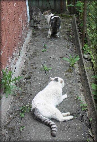 неожиданная встреча