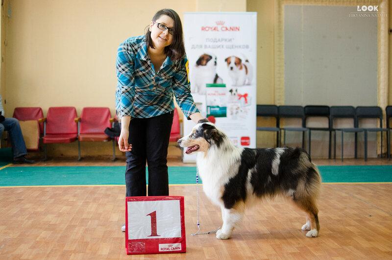 Выставочные успехи наших собак - 5 - Страница 27 0_a881f_89acc820_XL