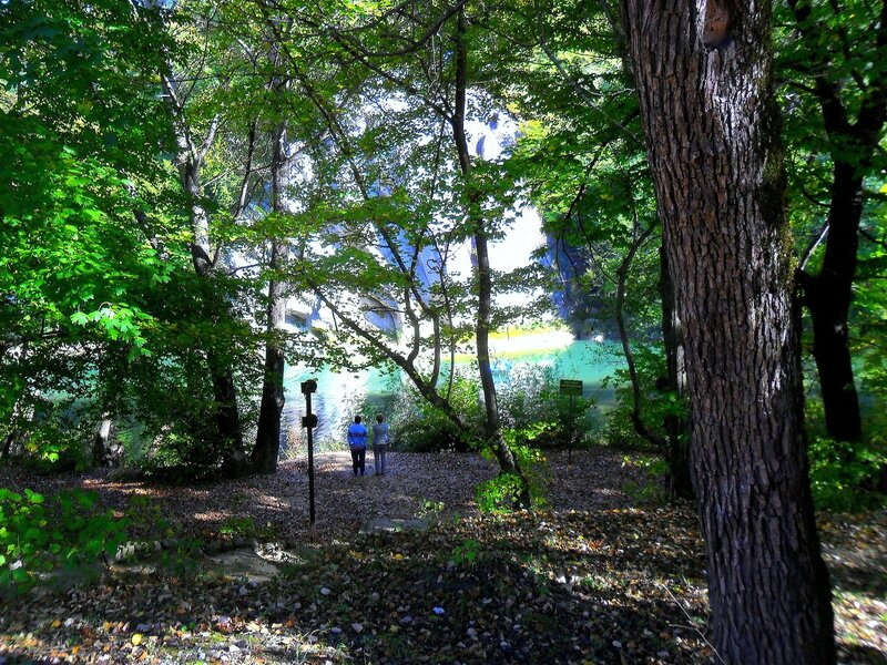 В лесу, у реки ... SAM_4058.JPG