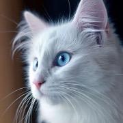 Белоснежная кошка