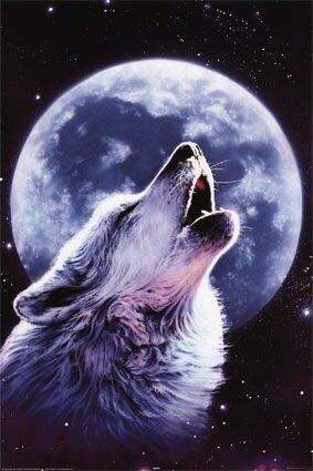 слава медяник мы волки скачать mp3