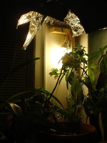 освещение комнатных растений