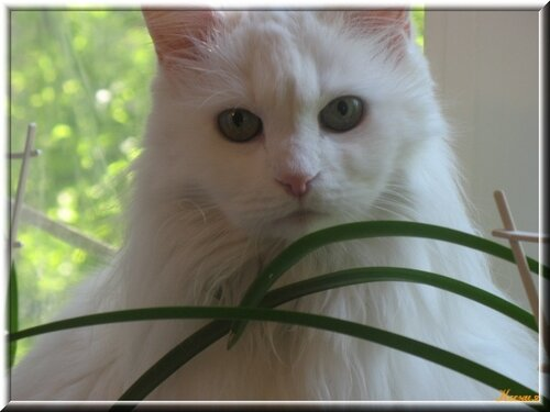 Ксения — «ну вот опять надо позировать!» на Яндекс.Фотках