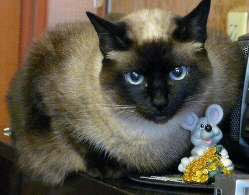 Кошки-мышки.