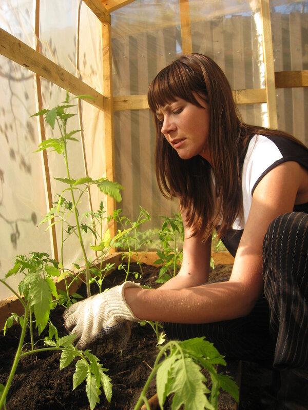 Как посадить помидоры огурцы и перец.