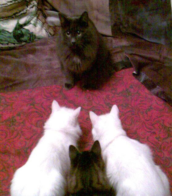 Трое на одного
