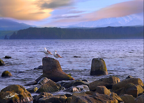 Лето, море, чайки...
