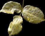 MagicalReality_VinMem1_green leaves-drops.png