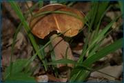 http://img-fotki.yandex.ru/get/5100/15842935.146/0_d0c85_2639a52_orig.jpg