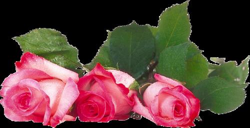 Картинки по запросу картинка  роза  клипарт
