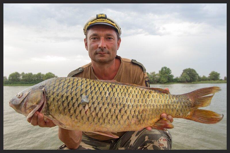 Сазан 7 кг, Астрахань, на ракушку, август 2014