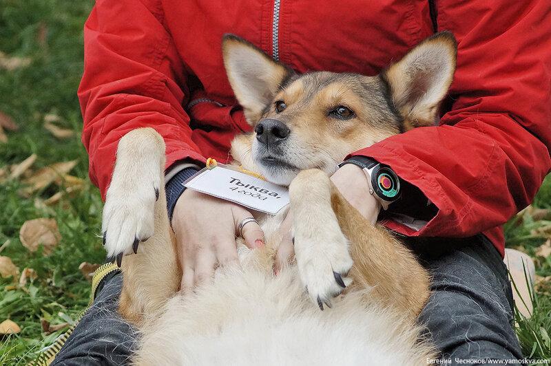 Осень. Фестивальный парк. Собаки. 04.10.14.28..jpg