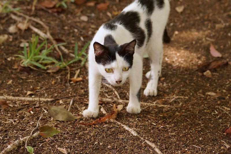 Кошечка в ботсаду Маврикия