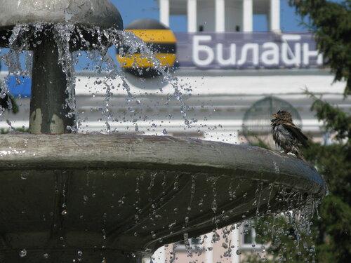 воробей - фонтан - билайн