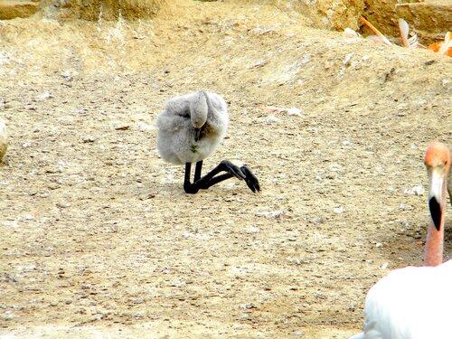 Птенец - коленками назад*