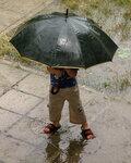 Грибной дождик