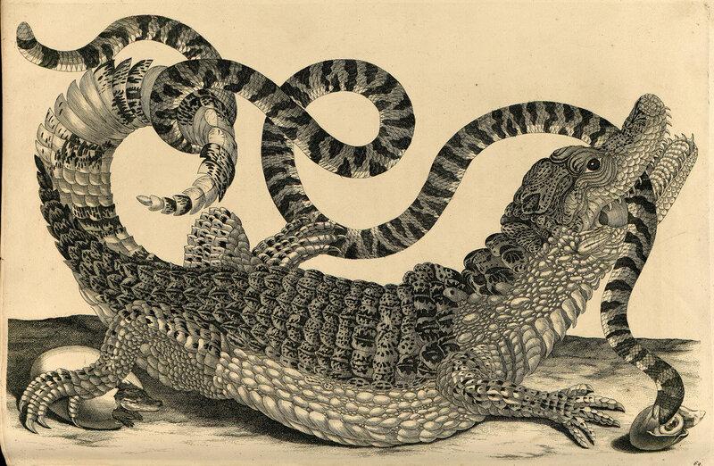 рисунки крокодила