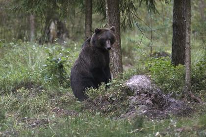В окрестностях Нью-Йорка медведь убил туриста
