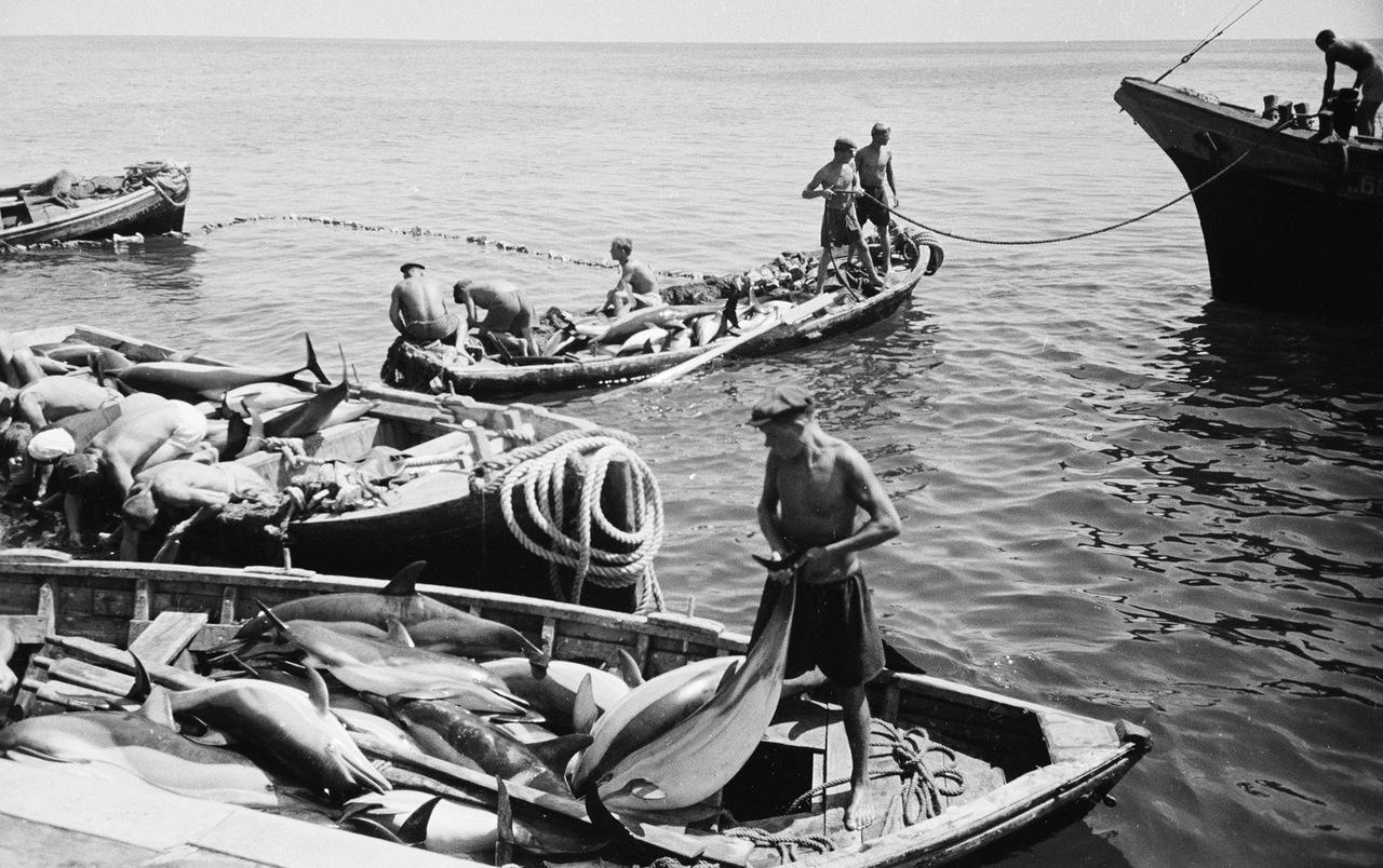 ловля дельфинов на черном море