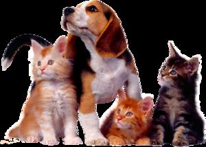 собака с кошками
