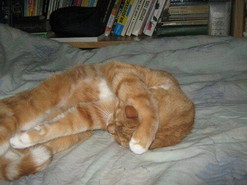 А у меня живет кошка... - Страница 4 0_f791a_bac61bb0_L