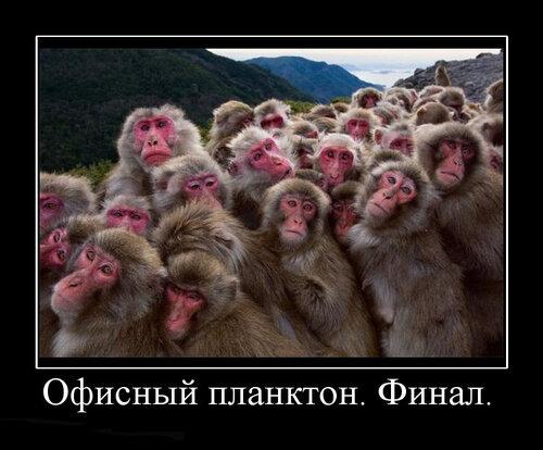 http://img-fotki.yandex.ru/get/5101/26873116.d/0_b8b76_dbb1eca_L.jpg