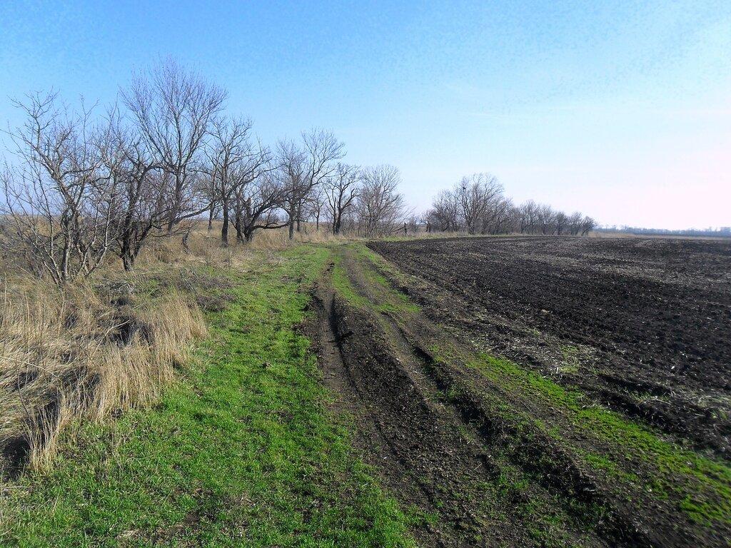 Дорога у деревьев и поля ... SAM_5439.JPG